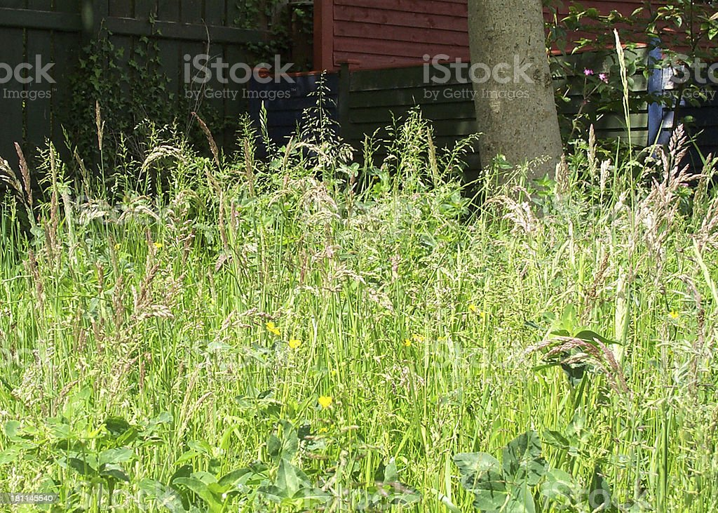 Meadow and Fence royalty-free stock photo