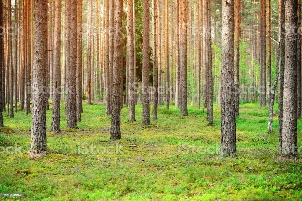 Meadow and forest stock photo