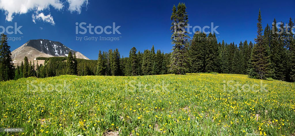 Meadow and Mount Peale in Utah Panoramic stock photo