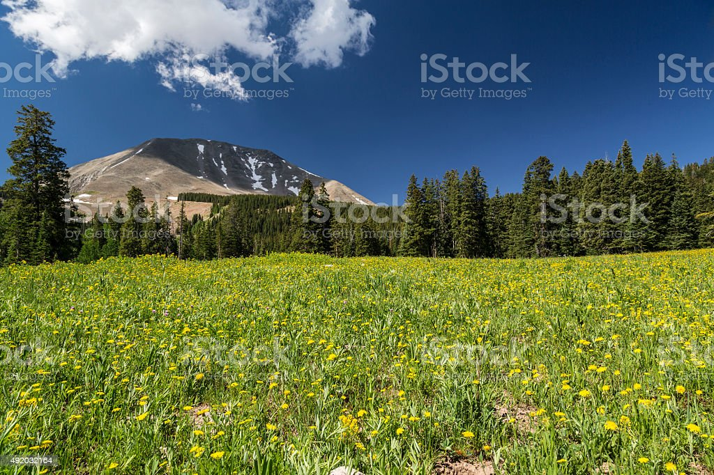 Meadow and Mount Peale in Utah stock photo