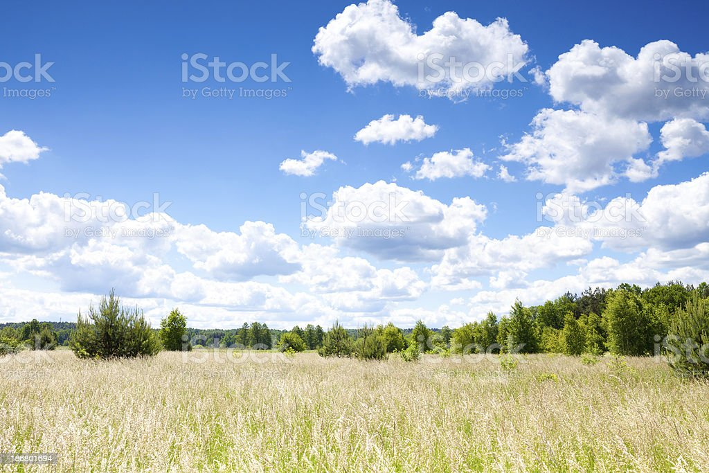 Meadow and sky stock photo