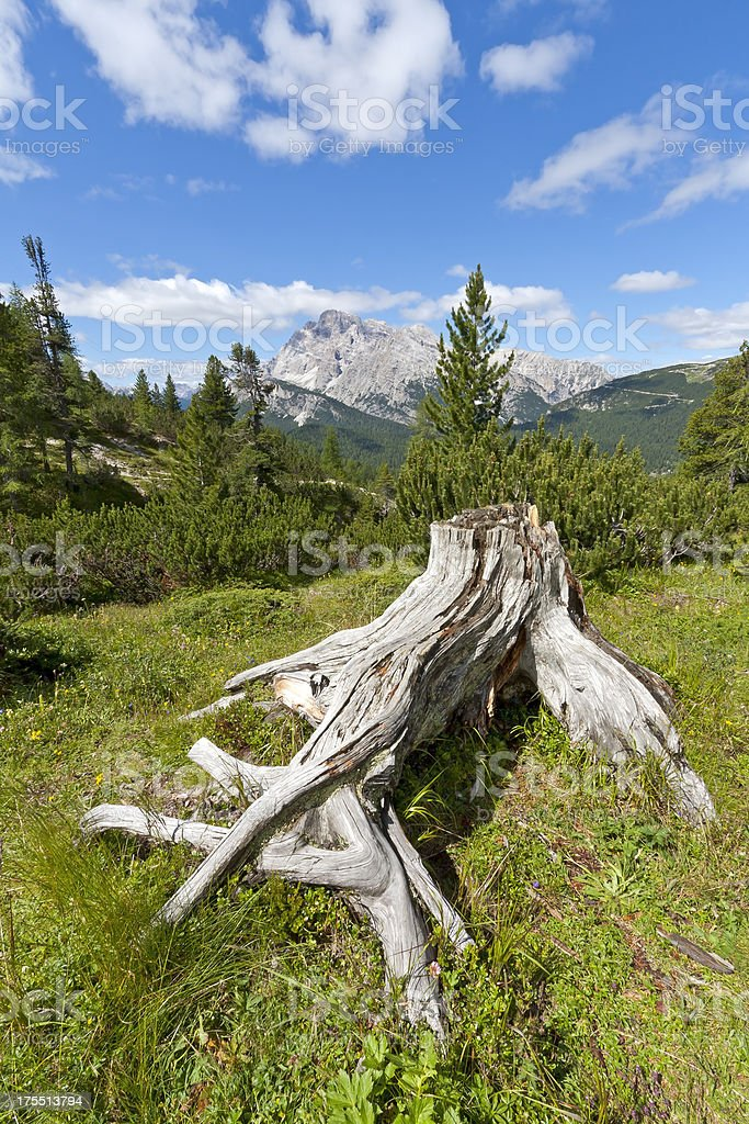 Meadow and tree trunk in the Alps stock photo