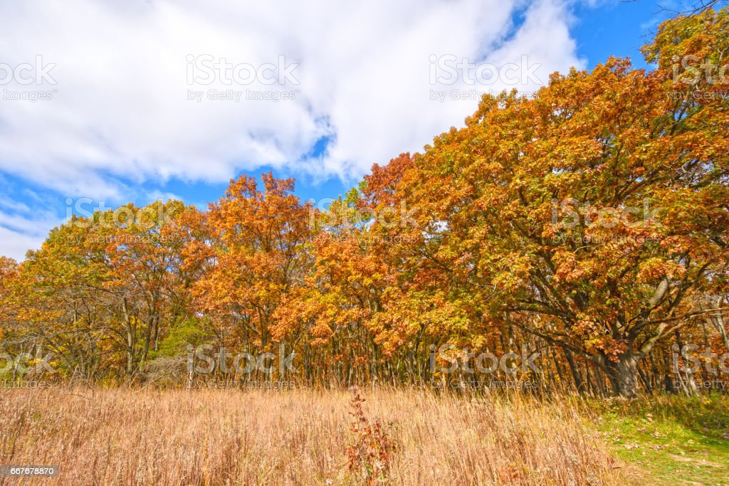 Meadow and Trees in the Fall stock photo