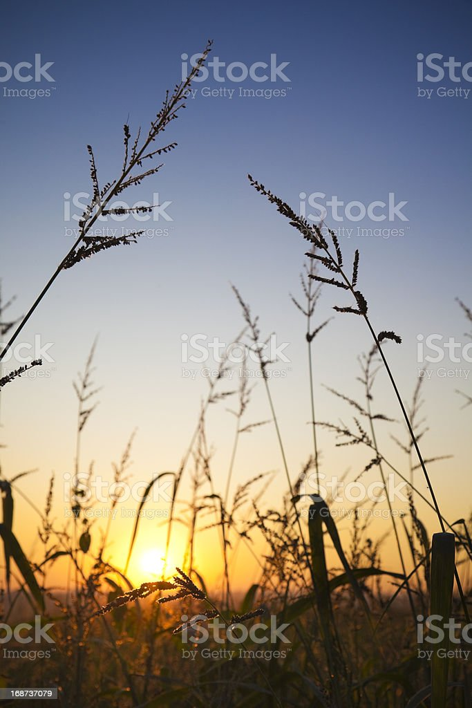 Meadow at dusk royalty-free stock photo