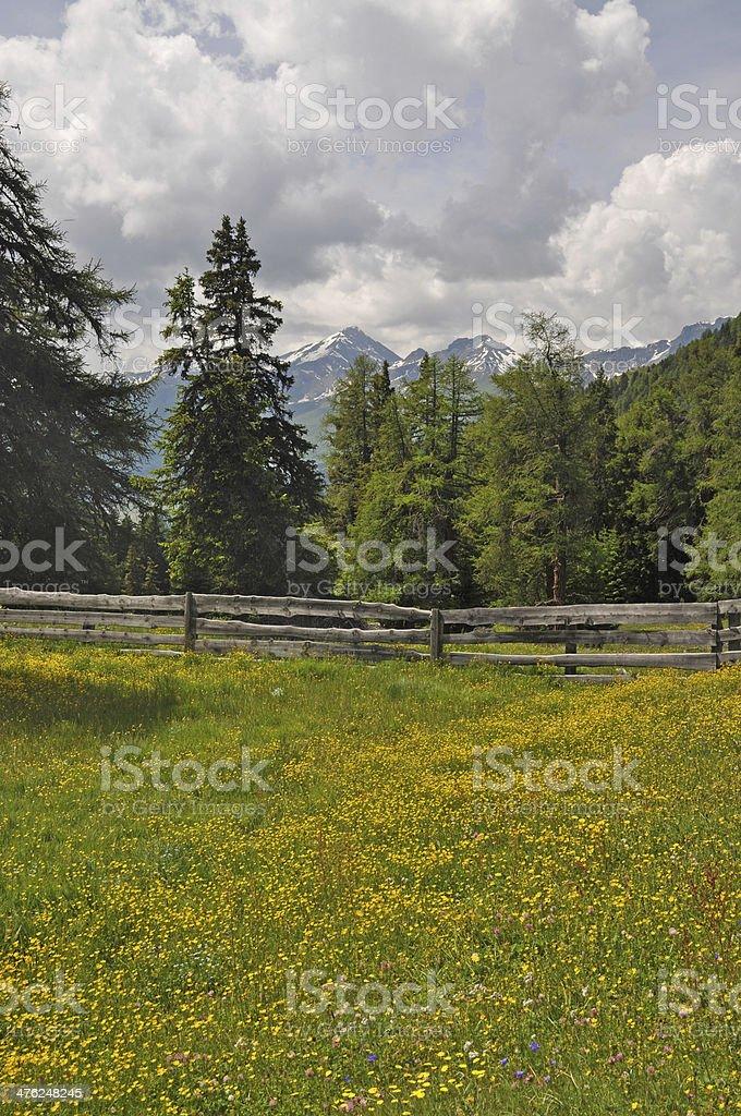 Meadow at Nauders, Austria stock photo