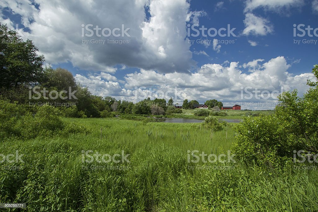 Meadow at river stock photo
