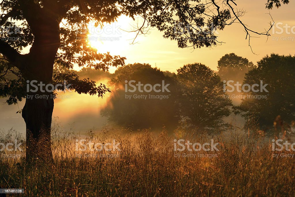 Meadow at Sunrise royalty-free stock photo
