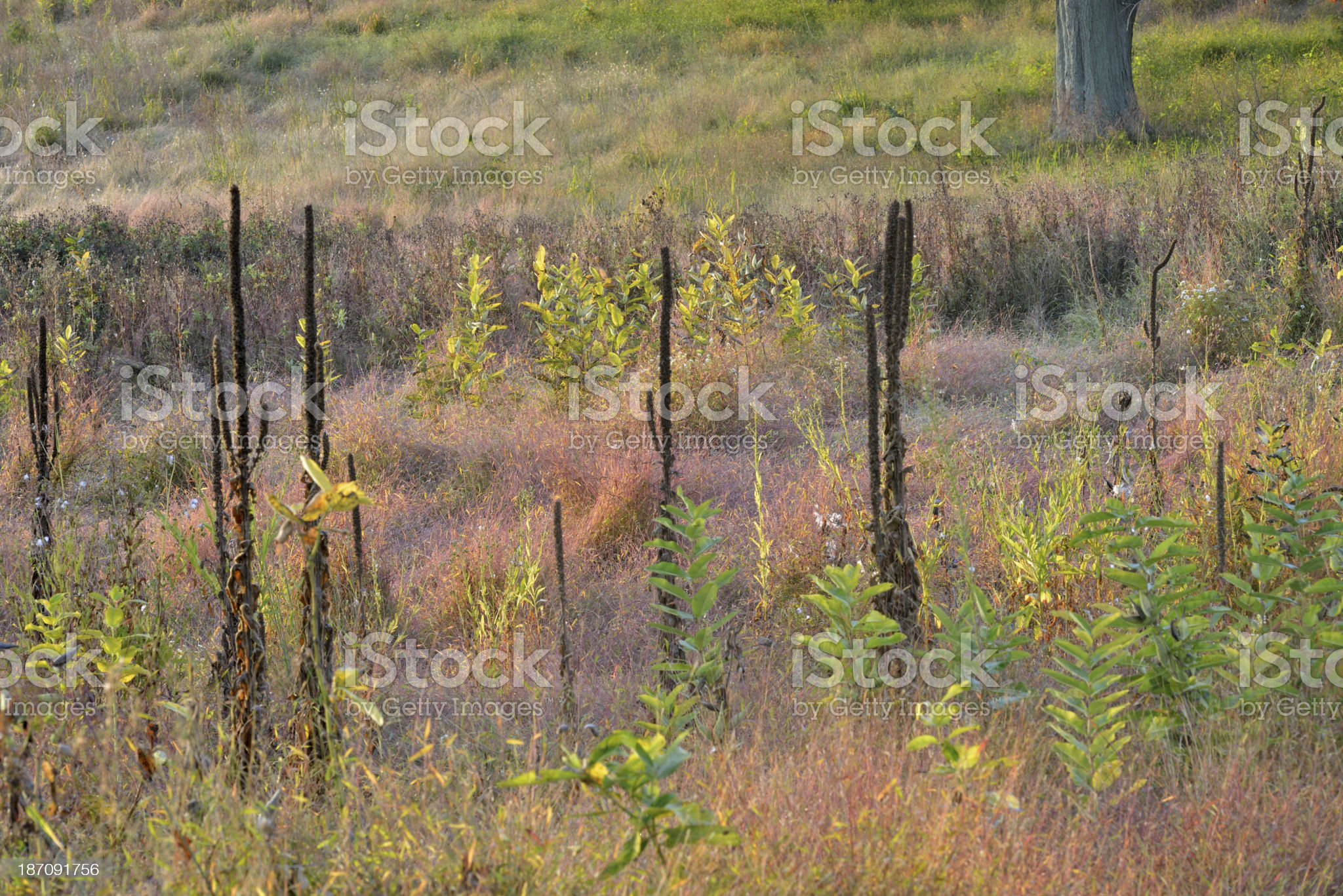 Meadow at Valley Forge royalty-free stock photo