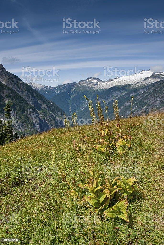Meadow Below Cascade Pass royalty-free stock photo