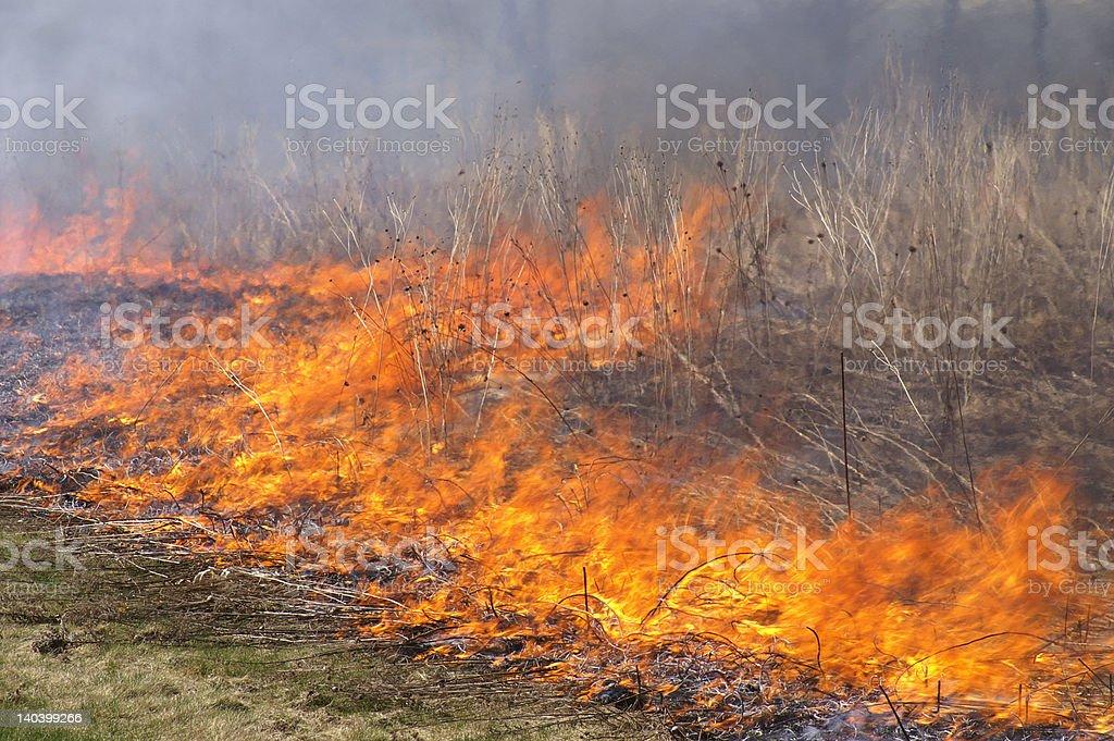 Meadow burn stock photo