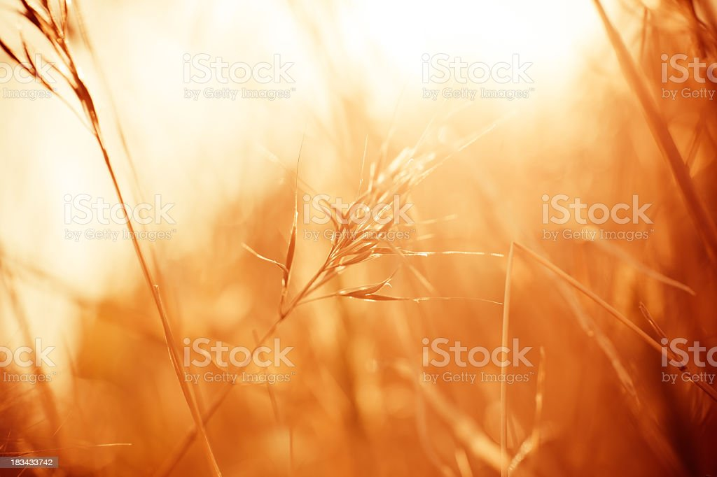 Meadow during sunrise royalty-free stock photo