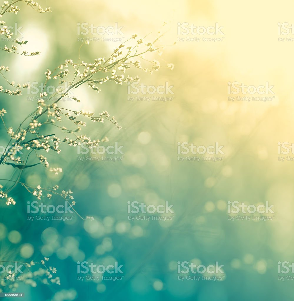 Meadow during sunset royalty-free stock photo