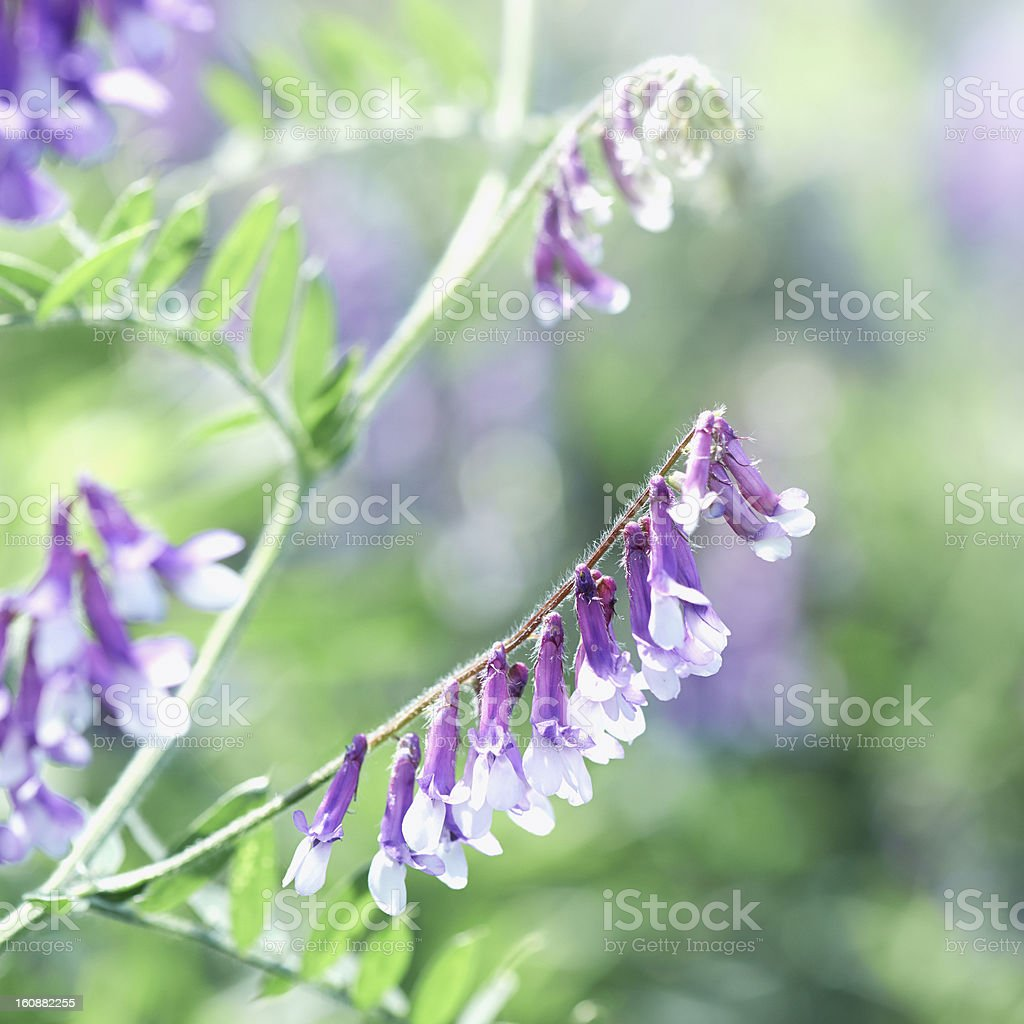 Meadow Flower stock photo