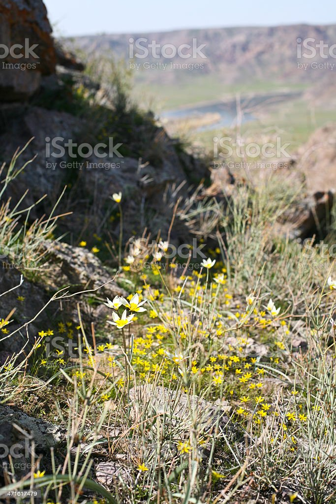 meadow flowers and grass stock photo