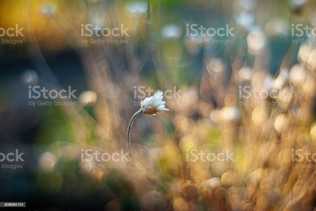Meadow flowers. Blurred abstract colorful nature background stock photo