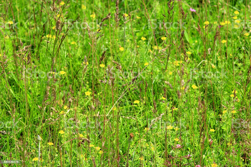 meadow flowers in the green grass stock photo