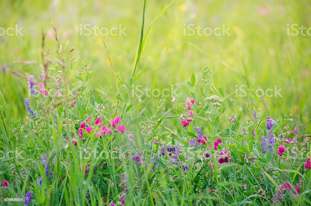 Meadow flowers in the meadow stock photo