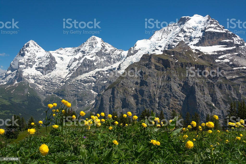 Meadow flowers near Murren, Switzerland stock photo