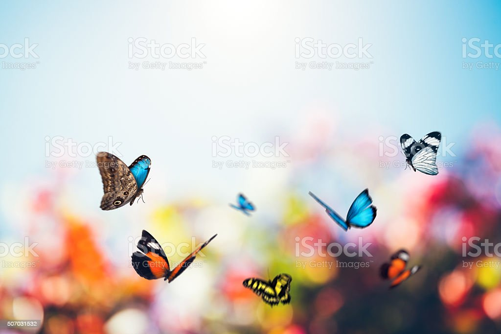 Meadow Full Of Butterflies stock photo