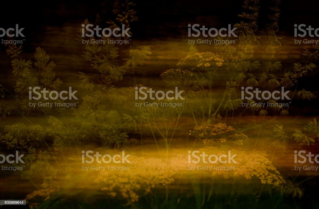 Meadow grass against a dark background. stock photo