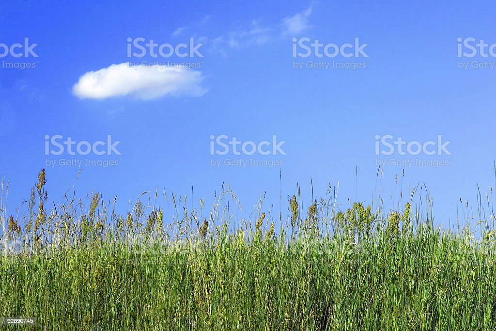Meadow grass and a blue sky royalty-free stock photo