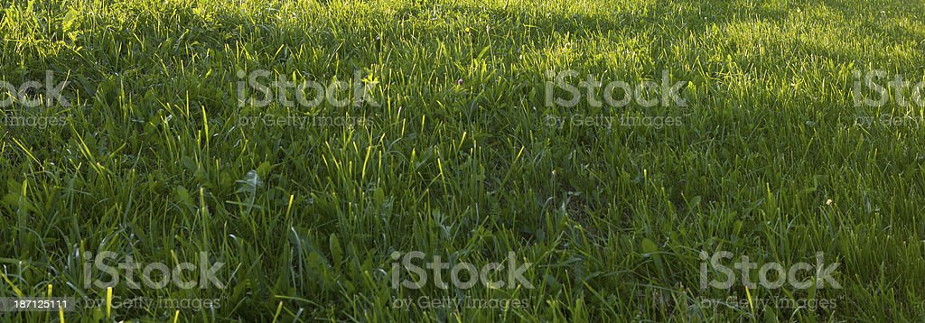 meadow in austria royalty-free stock photo