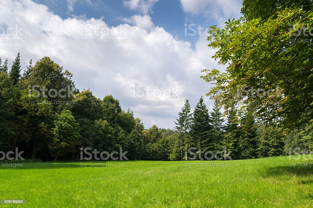 Meadow in Cesky Raj stock photo
