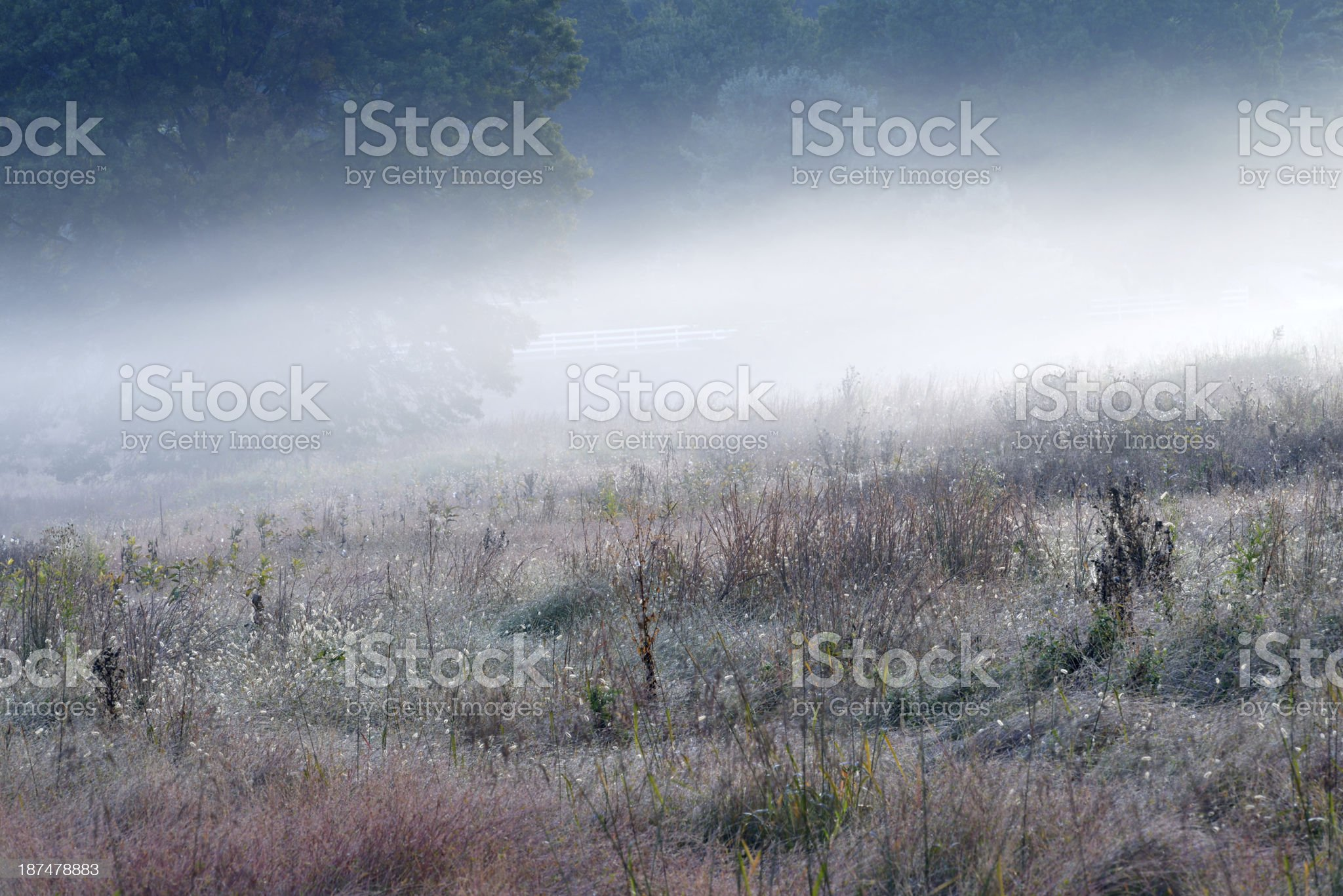 Meadow in Fog royalty-free stock photo