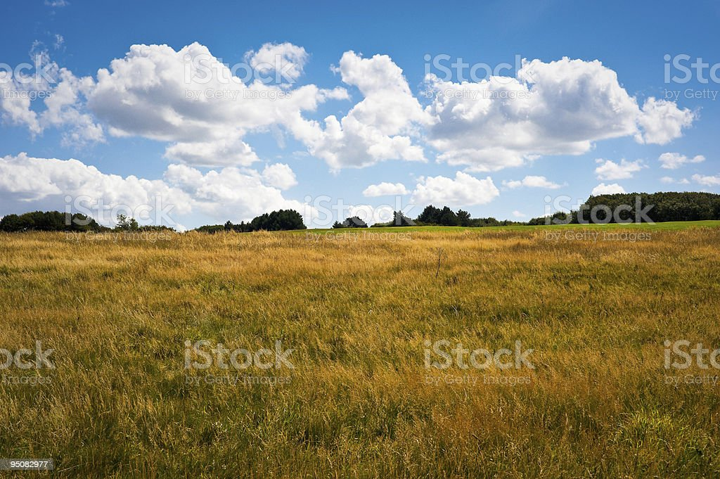 Meadow in Normandy royalty-free stock photo
