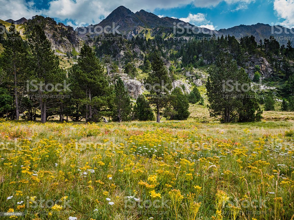 Meadow in Pyrenees mountains Catalonia Spain stock photo