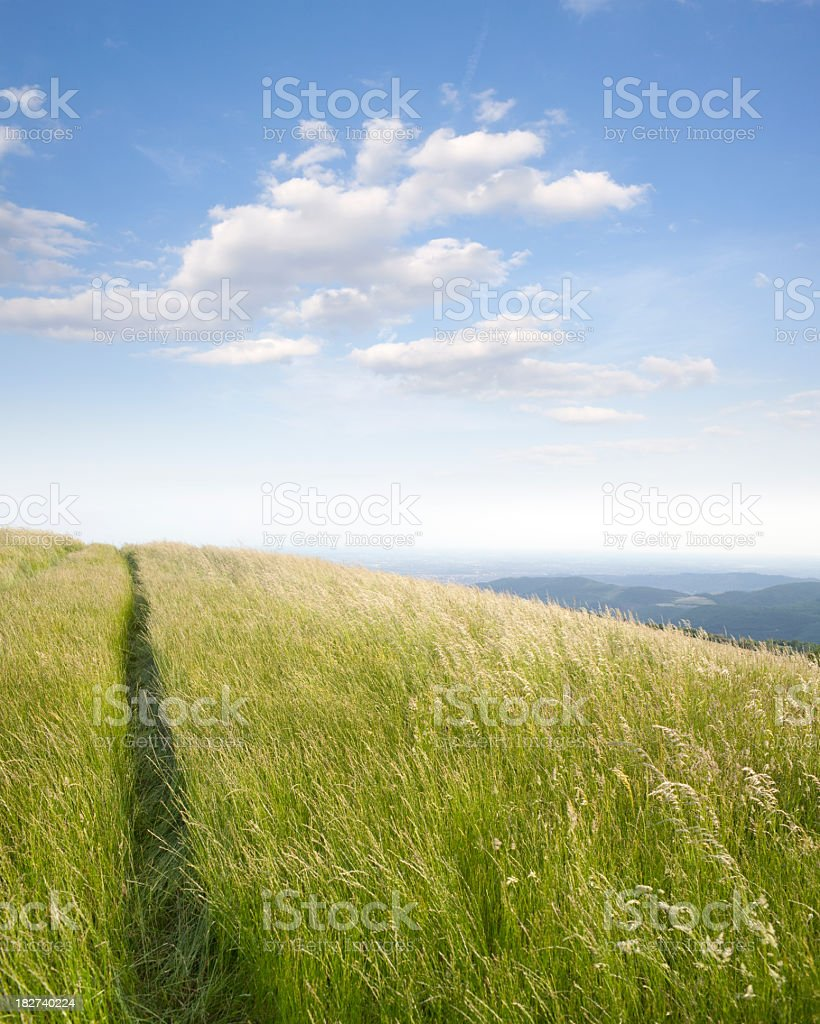 Meadow in spring royalty-free stock photo