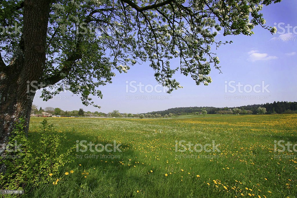 meadow in summer royalty-free stock photo