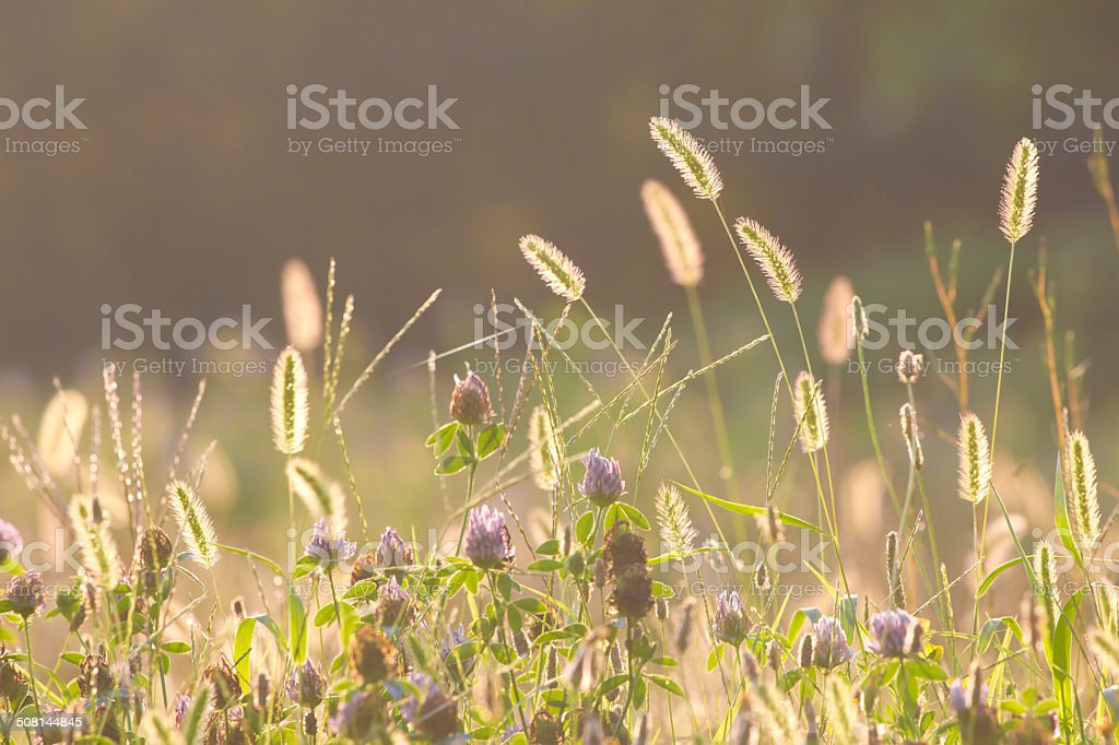 meadow in sunset stock photo