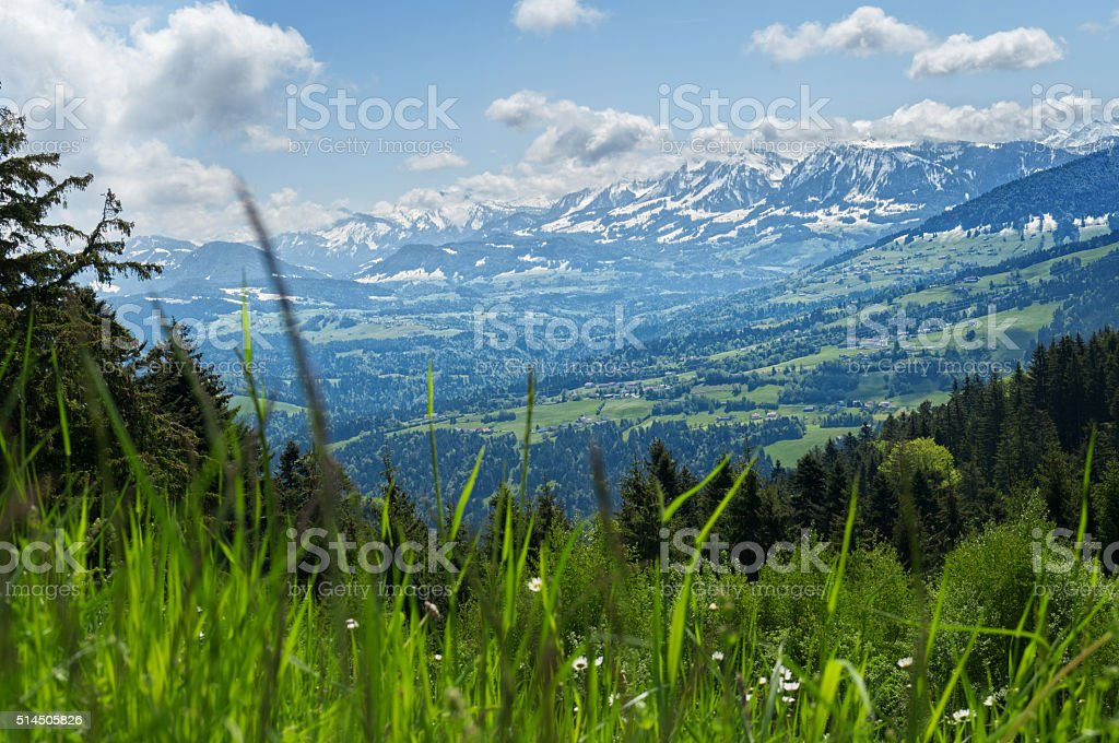 Meadow in the alp mountains with fir forest stock photo