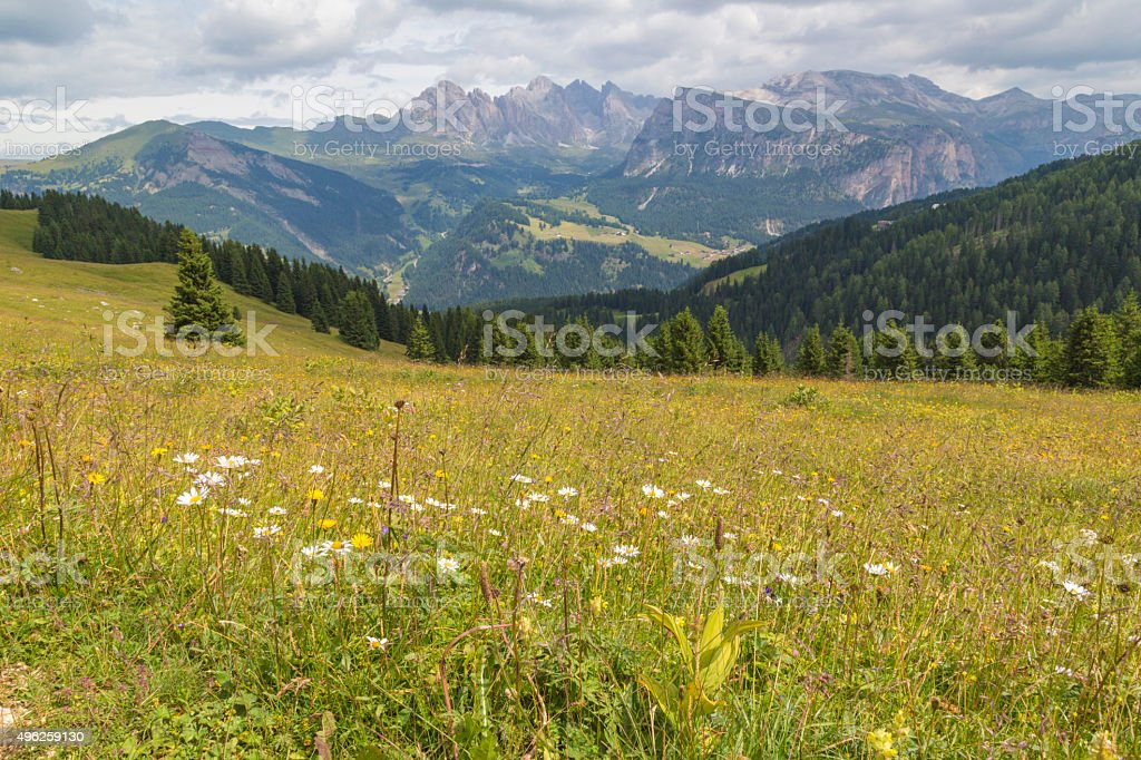 Meadow in the Dolomites stock photo