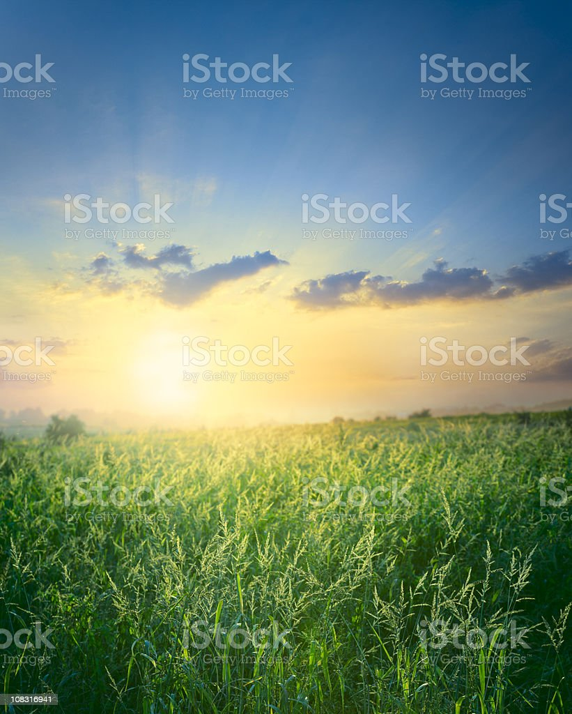 Meadow in the evening royalty-free stock photo