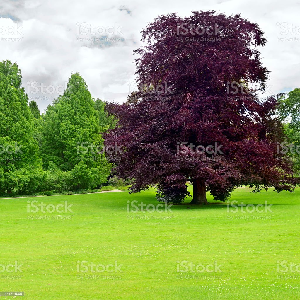meadow in the park royalty-free stock photo
