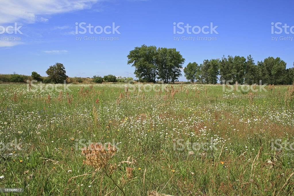 Meadow in the Summer stock photo