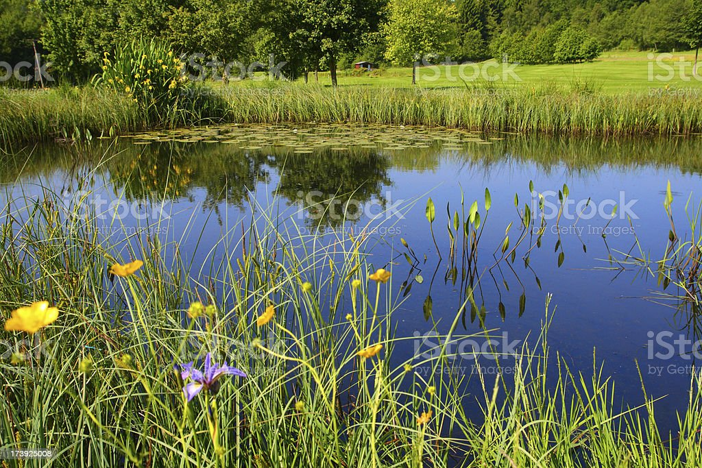 Meadow Lake royalty-free stock photo