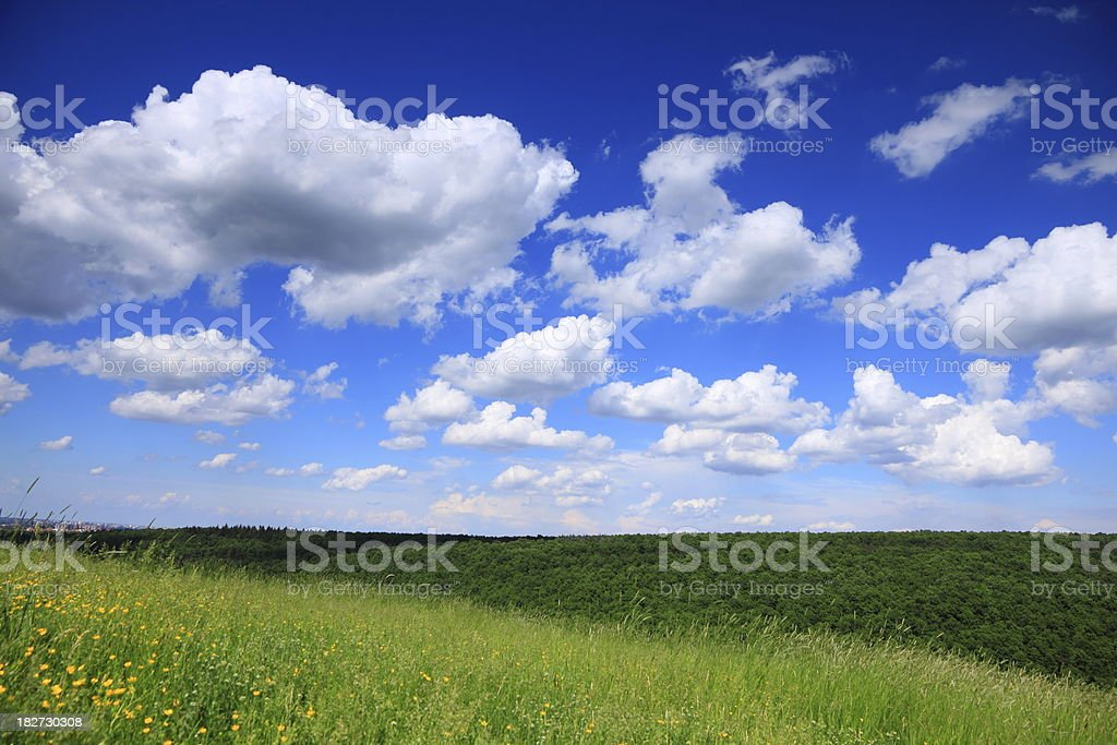 Meadow Landscape royalty-free stock photo
