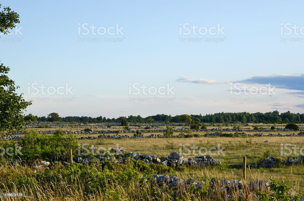 Meadow landscape with a lot of stonewalls stock photo