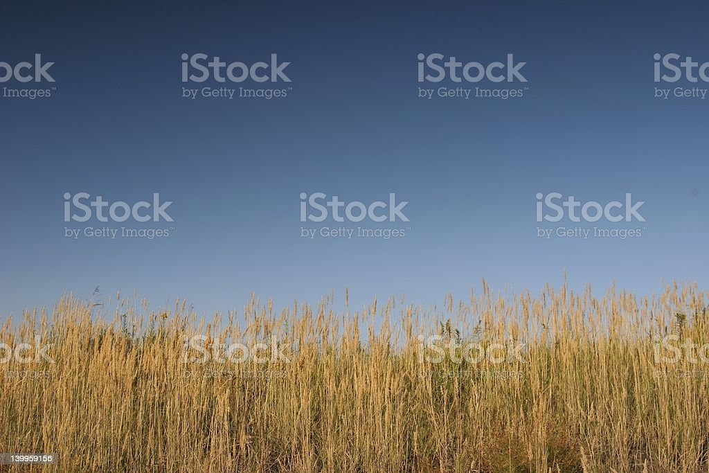 Meadow meets the Sky royalty-free stock photo