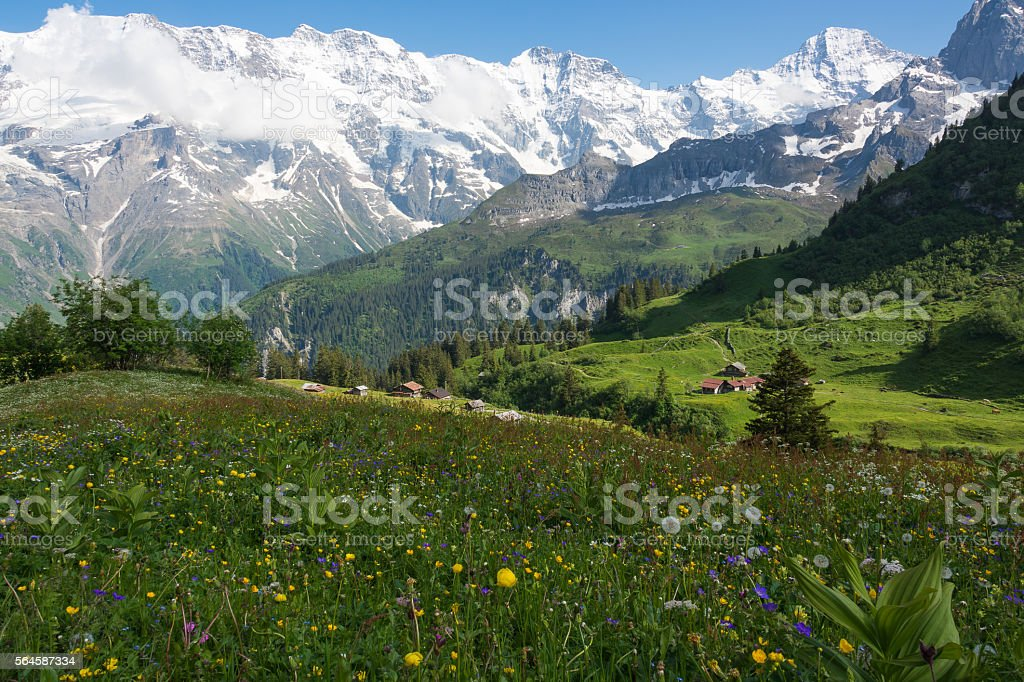 Meadow near the village of Mürren, Switzerland stock photo