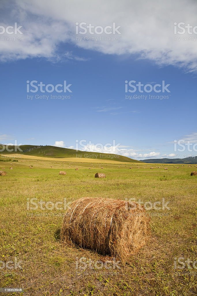 meadow of Inner Mongolia royalty-free stock photo
