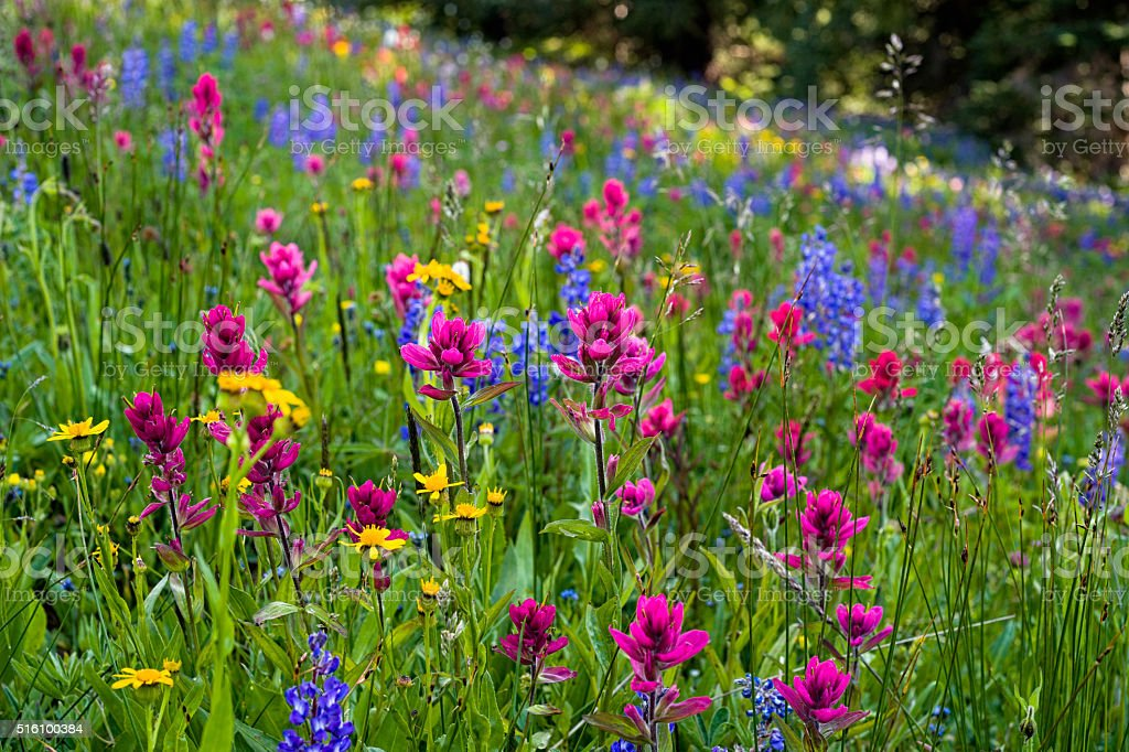 Meadow of Mountain Wildflowers stock photo