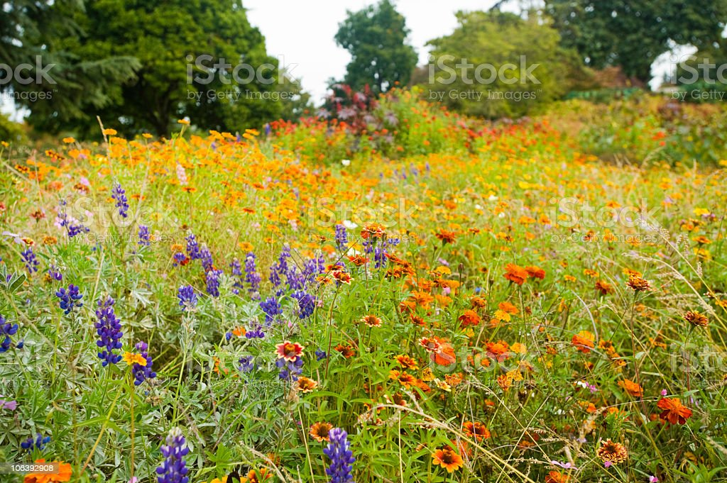 A meadow of variously colored wildflowers stock photo