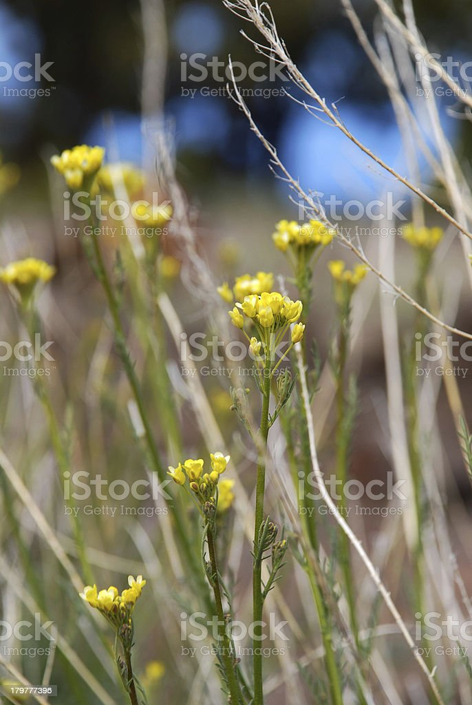 meadow of wild flowers royalty-free stock photo