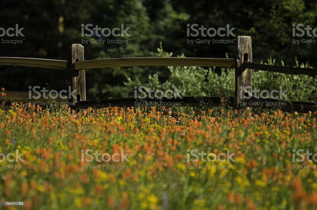 Meadow of Wildflowers and Wood Fence royalty-free stock photo