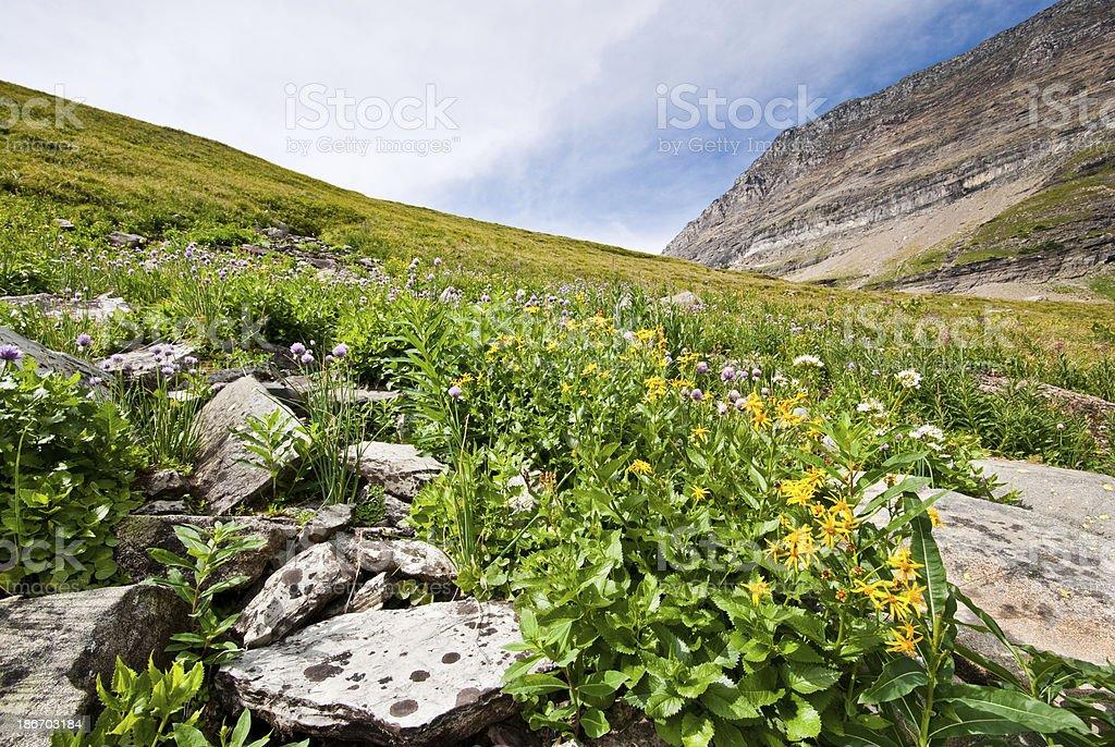Meadow of Wildflowers Below Haystack Saddle royalty-free stock photo