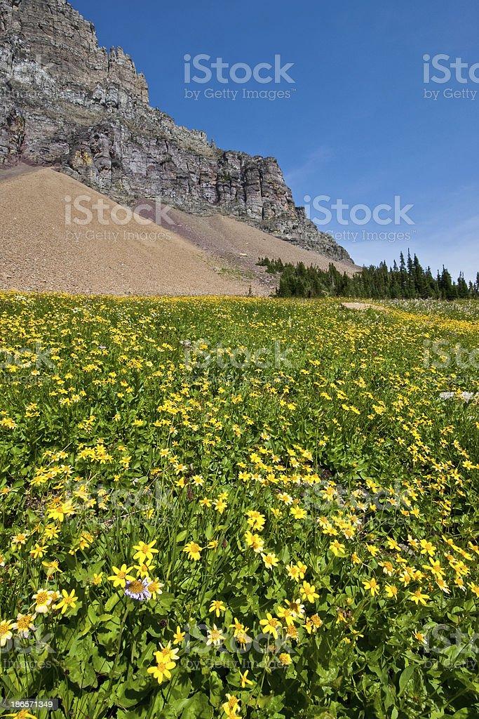 Meadow of Wildflowers Below Mount Clements stock photo